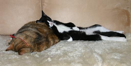 Smulan sover med ansiktet ner i ullfällen och Findus slappar